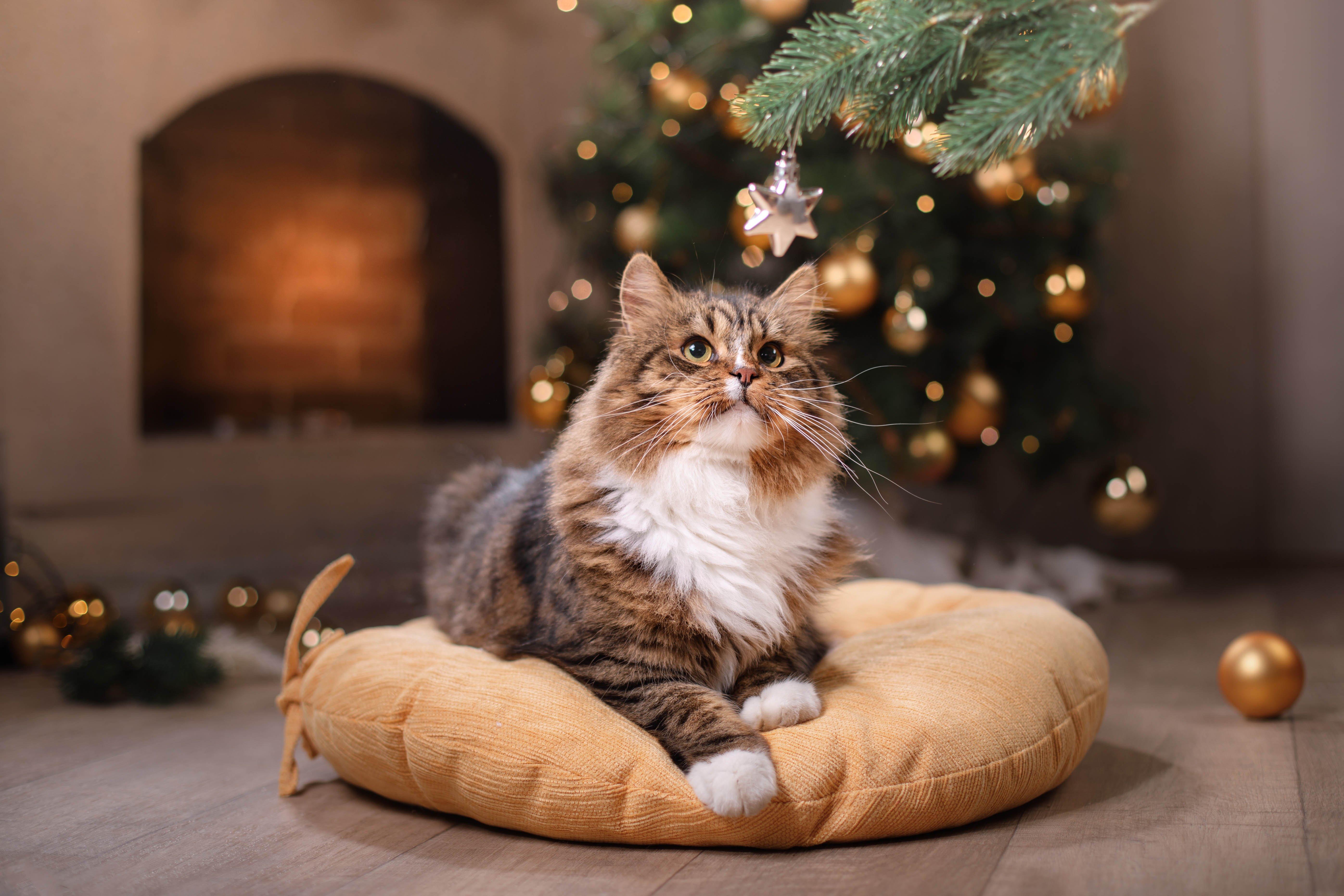 Weihnachten mit Katze Rückzugsorte einrichten