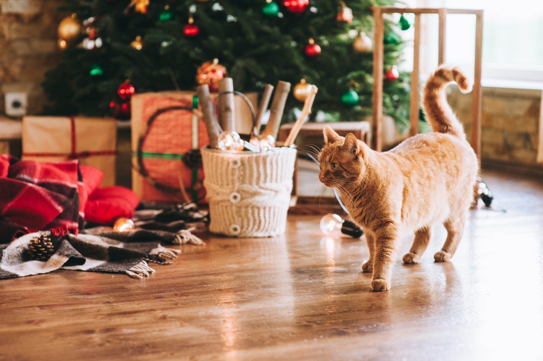 Weihnachten mit Katze Geschenkbänder außer Reichweite