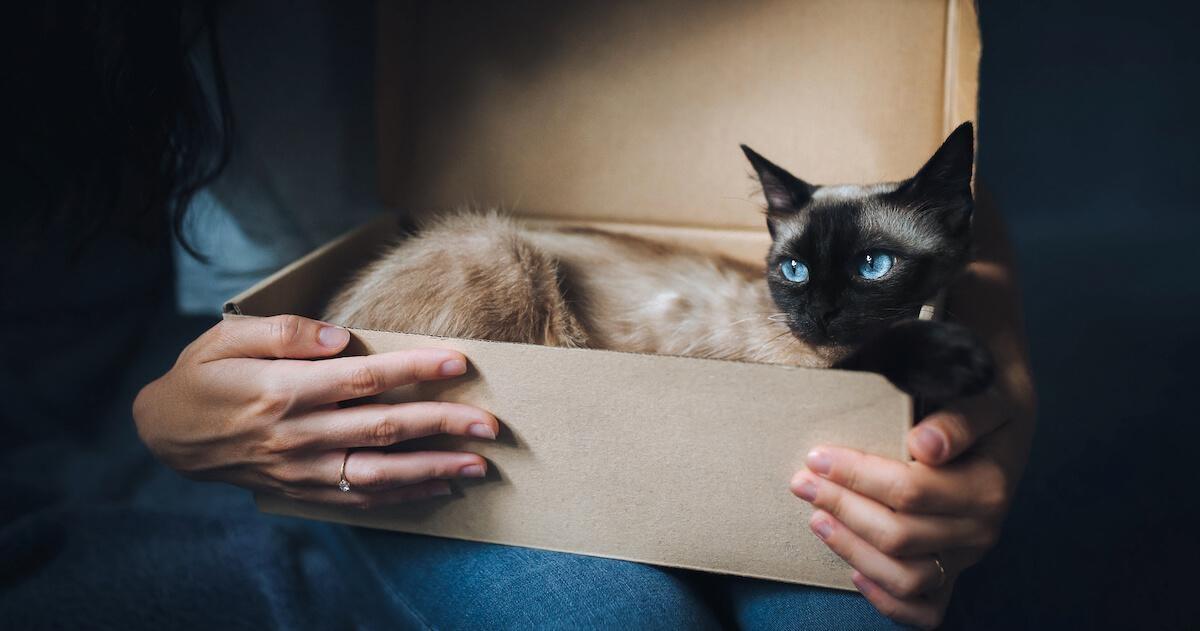 Katze im Karton wird gehalten