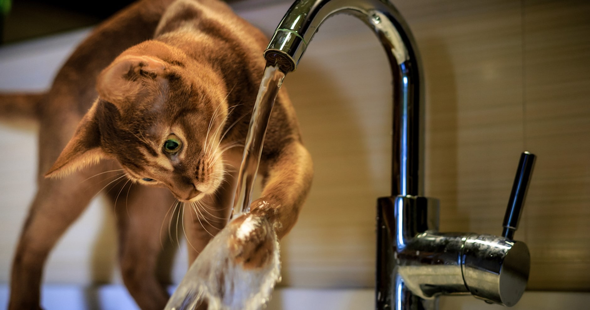 Katze trinkt vom Wasserhahn