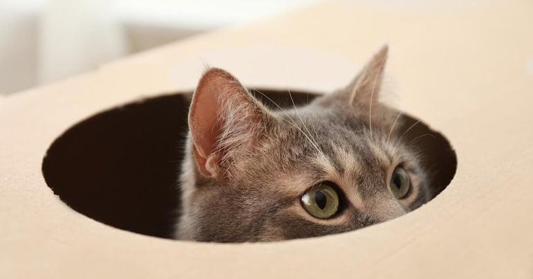 Katze Versteck im Karton-min