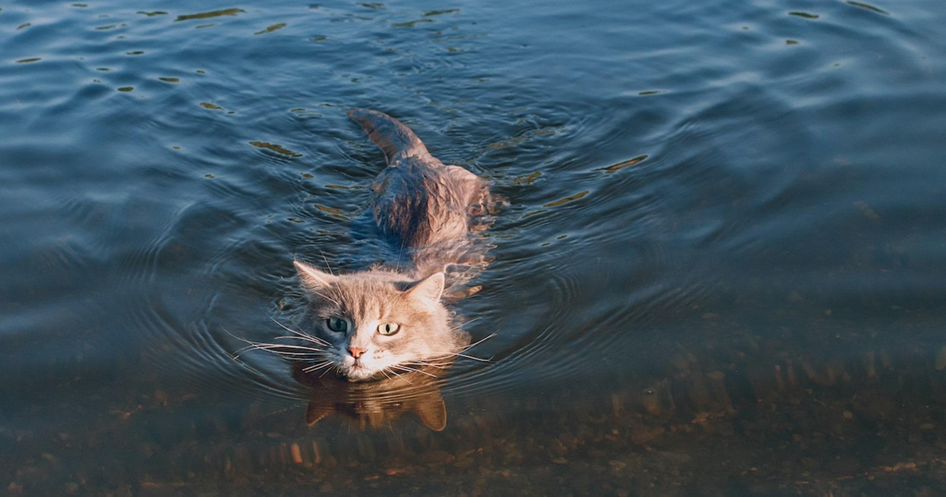 Katze ist am schwimmen