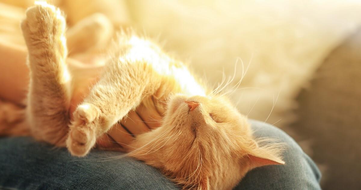 Mag meine Katze mich wenn sie zusammengerollt schläft