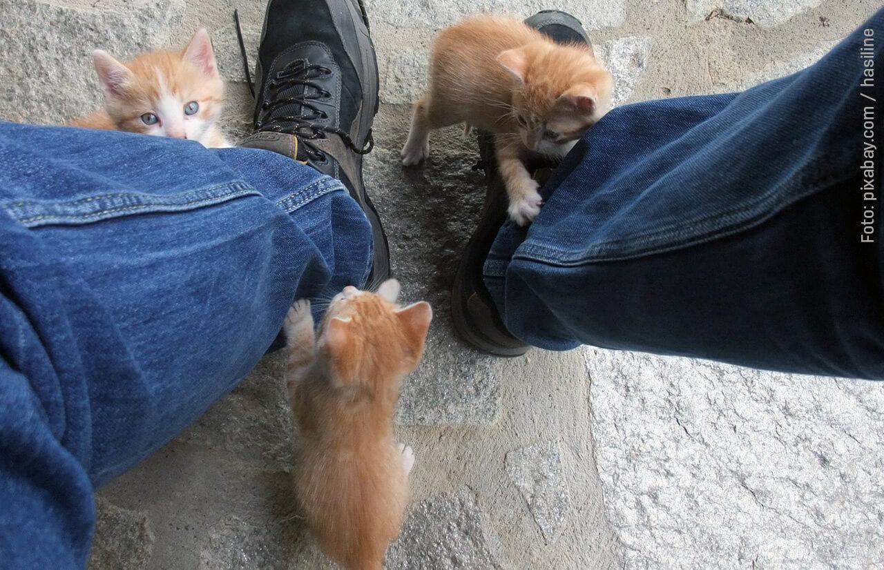 Katzenkindergarten4