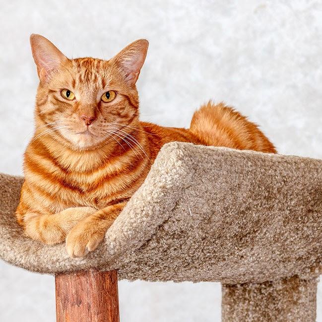 Bereid je kat voor op het einde van de lockdown