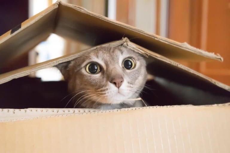 gato escondido dentro de caixa de cartão