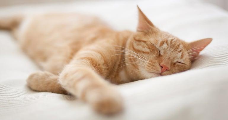 Jouw kat Je beste vriend tijdens quarantaine