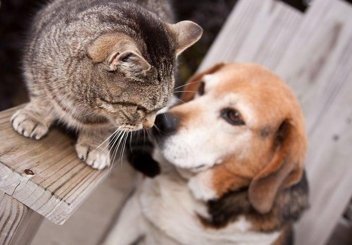 chien et chat se rencontrent