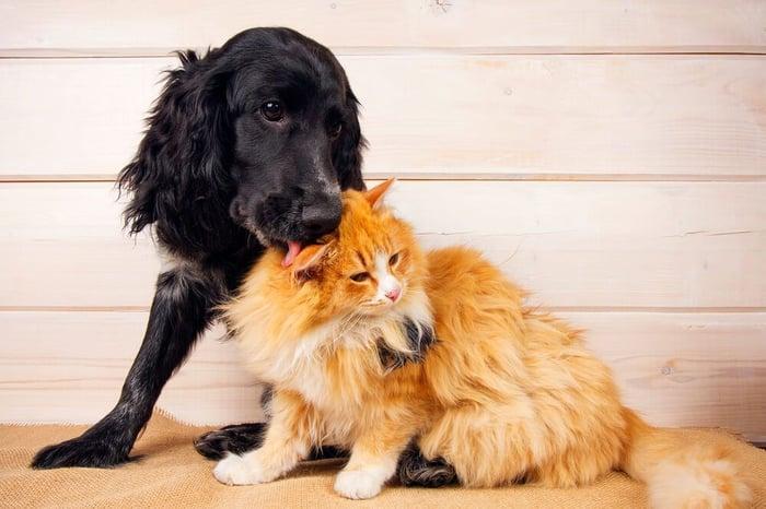 chien et chat cohabitent en paix
