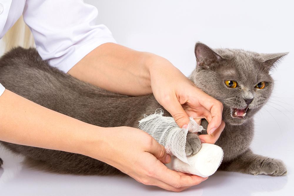 Por qué mi gato maulla  01