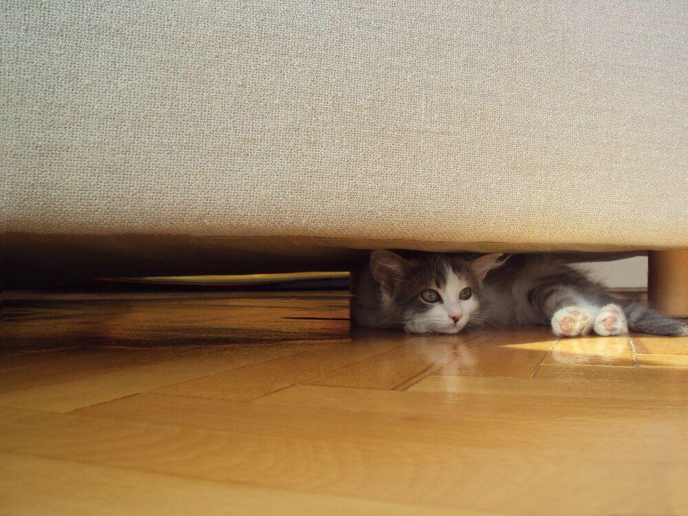 Por que mi gato se esconde debajo de la cama_2