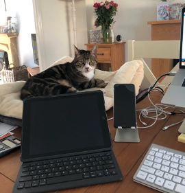 cat-in-home-office