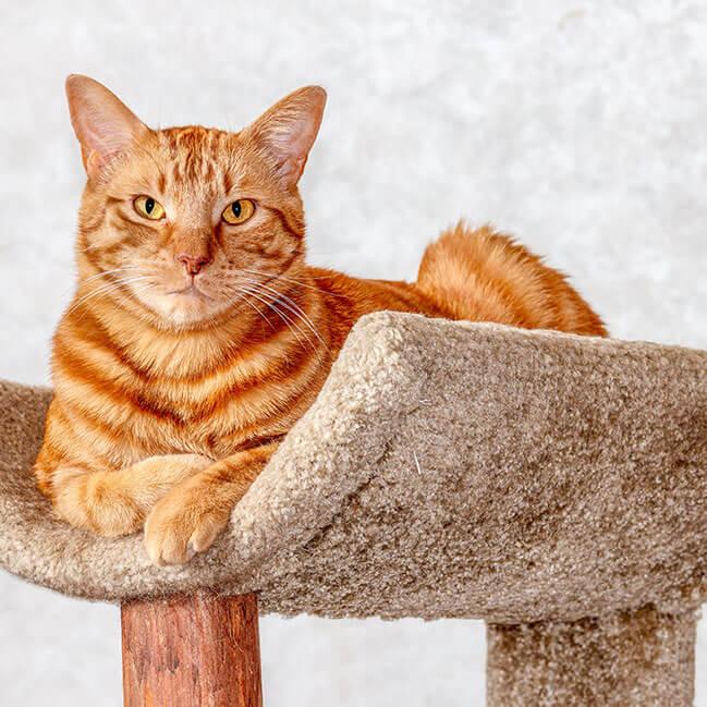 Katze liegt entspannt auf Kratzbaum