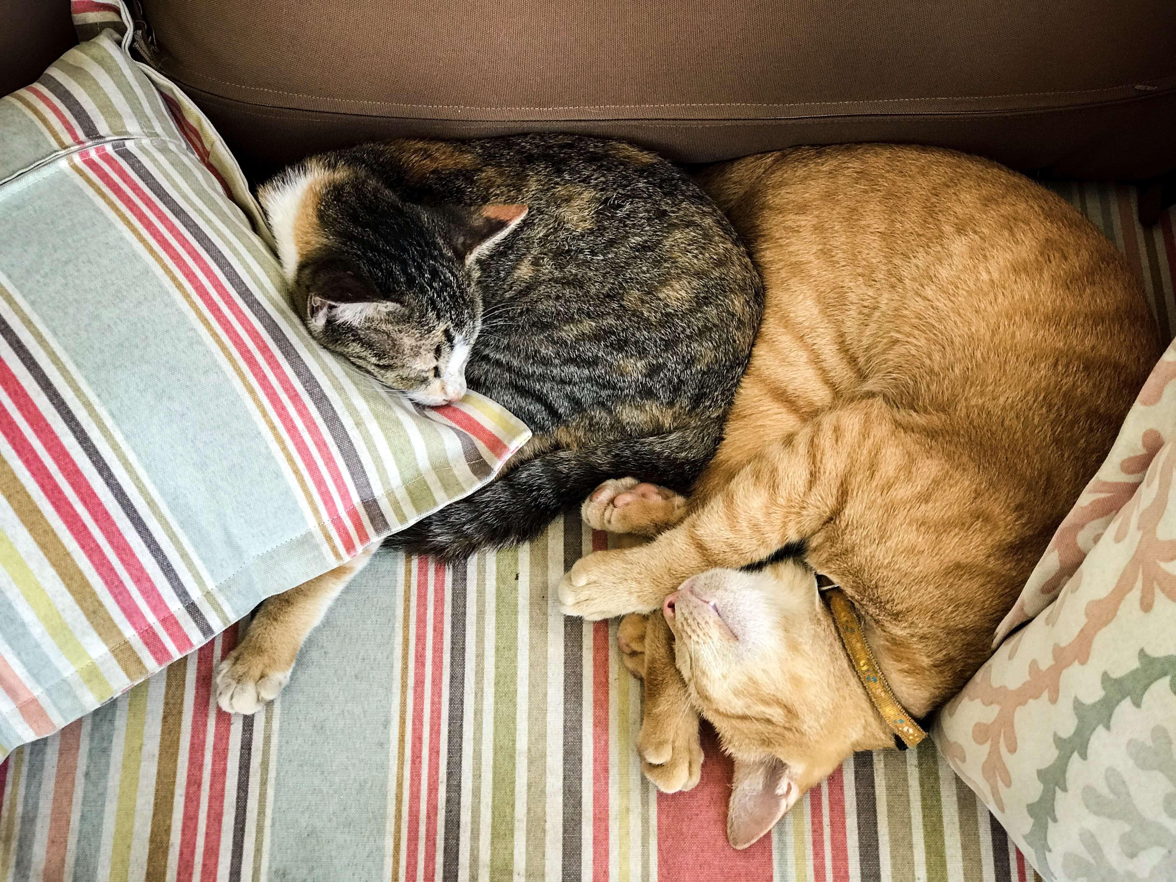 Q&A+Expert+Tension+between+cats-Jan-18-Editorial-05