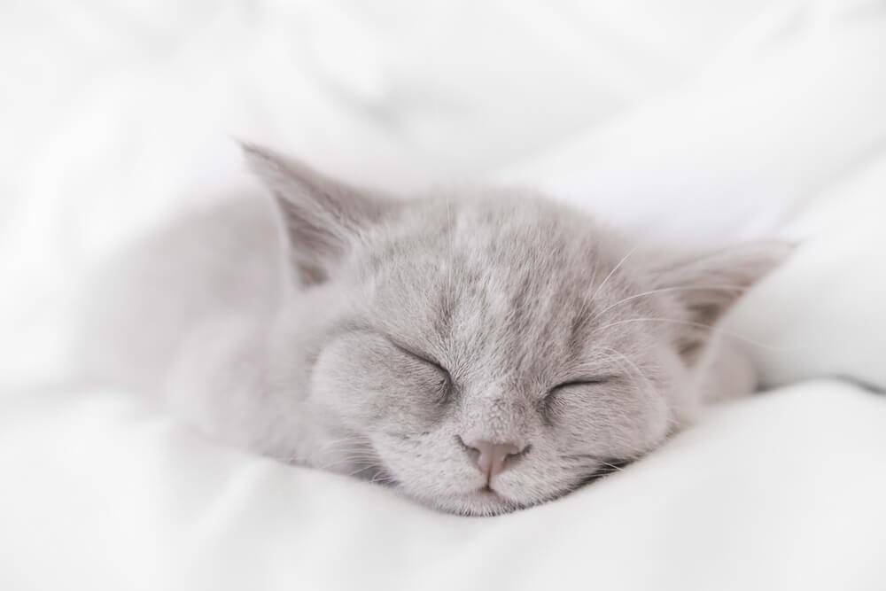 Katze schläft eingekuschelt in Decken