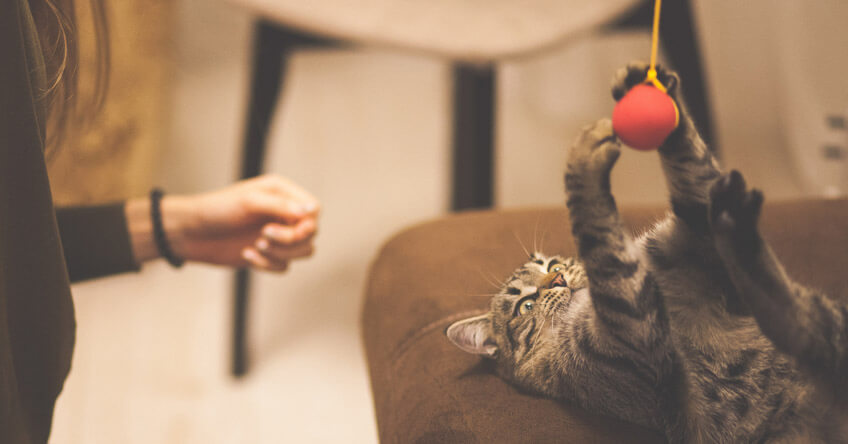 Katten ligger på rygg och fångar bollen