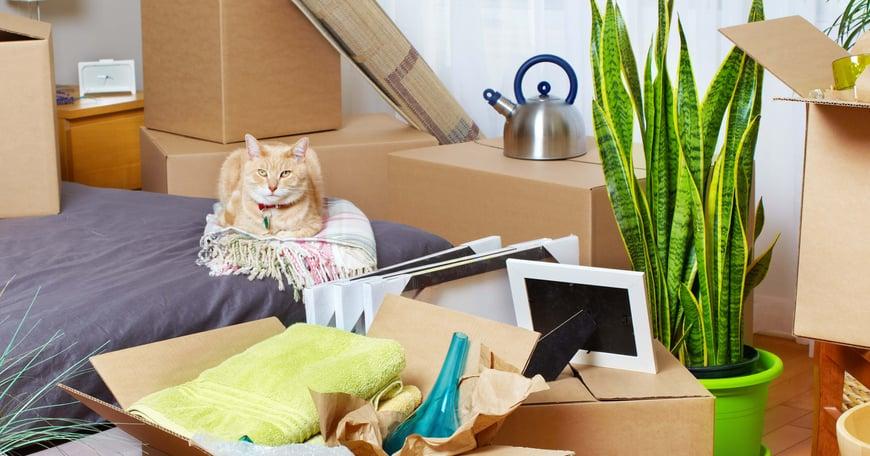 Katt ligger på sängen med flyttkartonger runt omkring sig