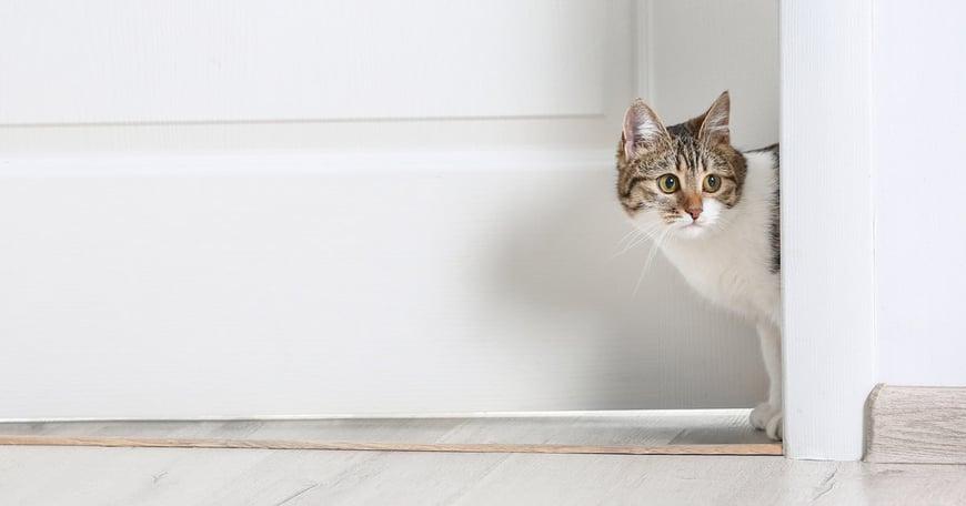 Katt upptäcker nytt hem