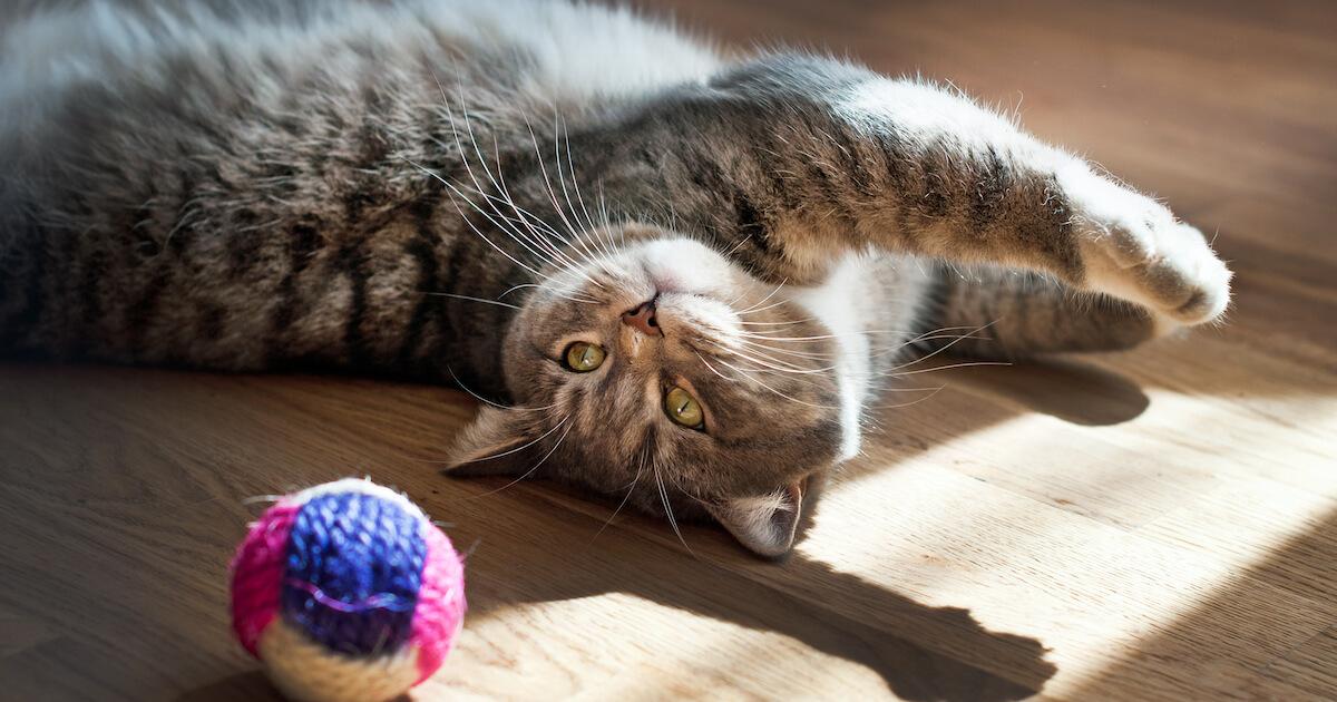 Katten och bollen