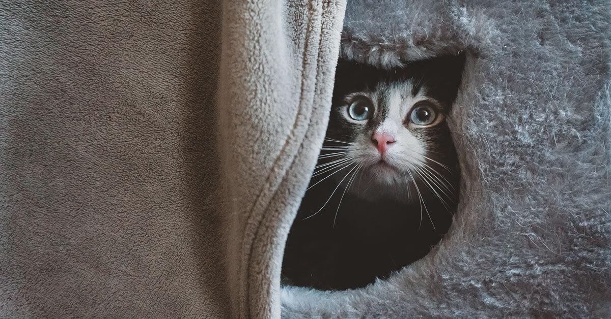 katt i sitt gömställe