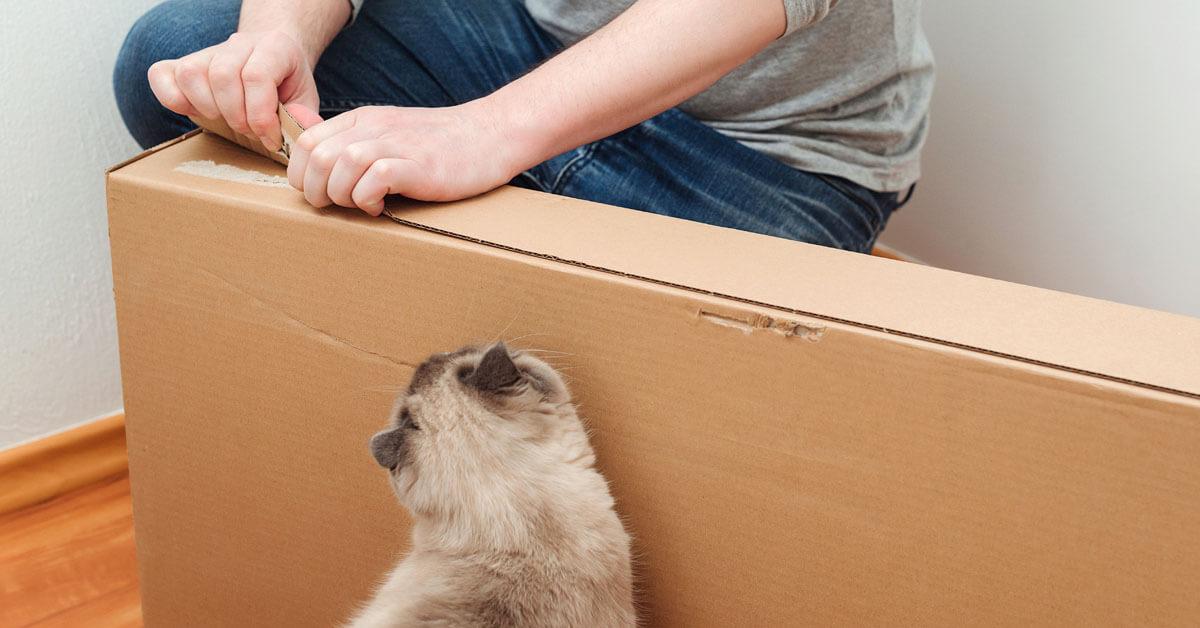 katt med och öppna kartong