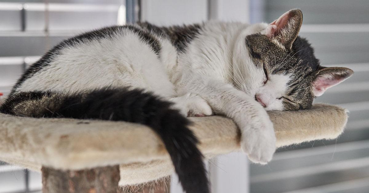 katt på hög hylla