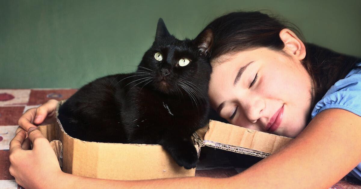 Schwarze Katze im Karton wird vom Mädchen umarmt