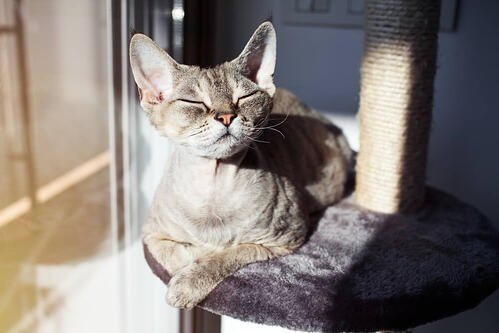 cat in the sun on his cat tree