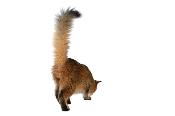 Neugieriges Katzenverhalten