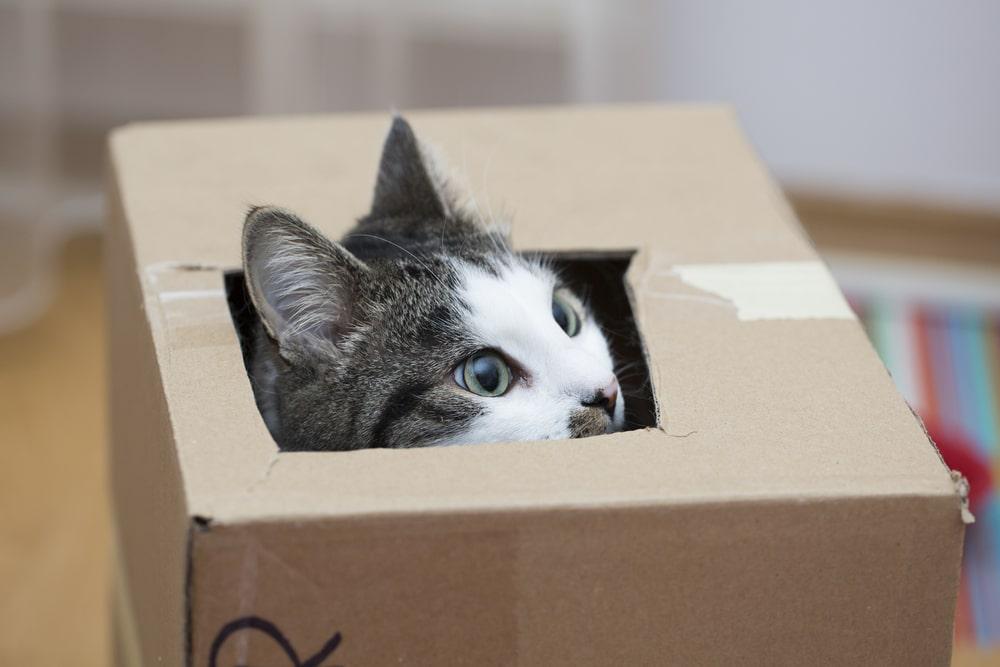 Ängstliche Katze versteckt sich in Karton