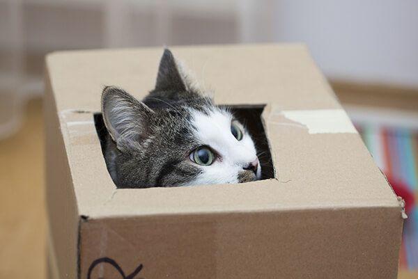 cat hidden in a box