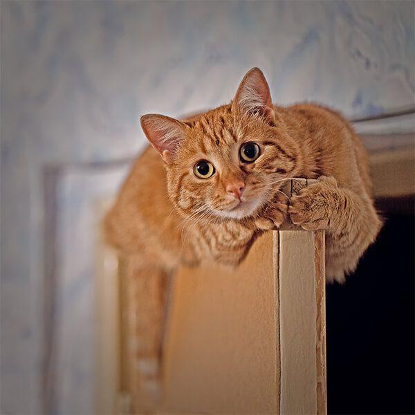ginger cat on a door