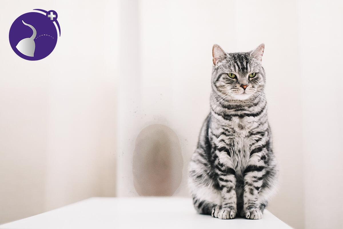 Katze markiert mit Harn wenn sie Stress hat