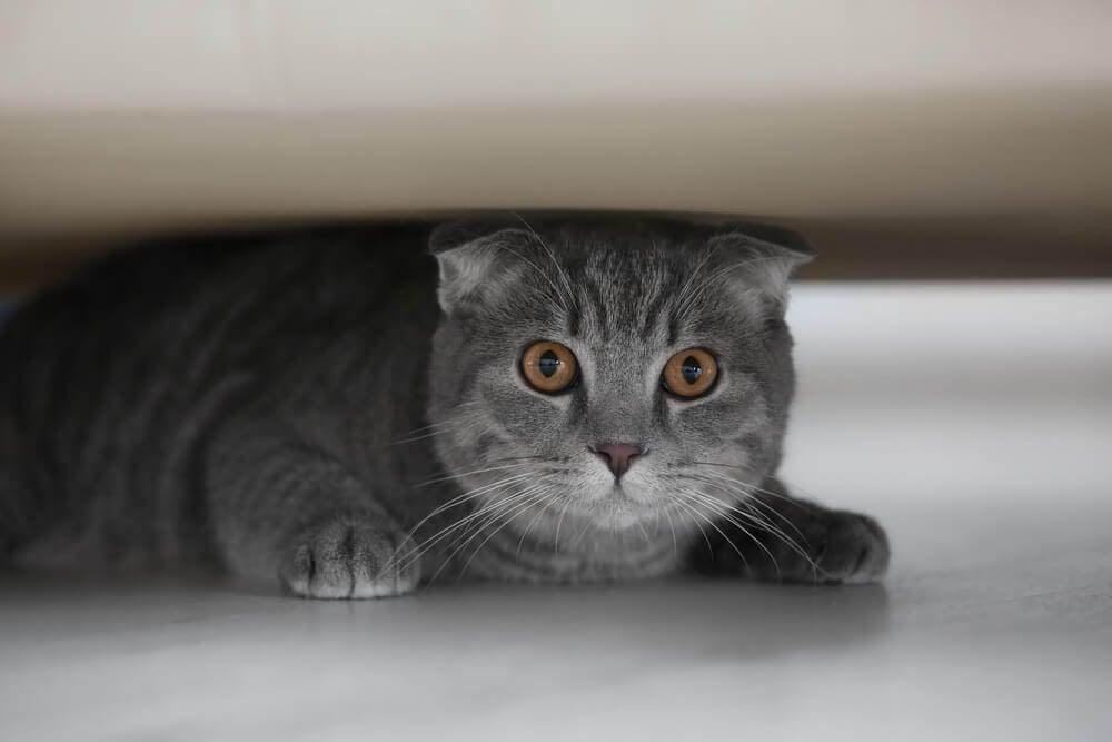Katze zieht sich unter Sofa zurück