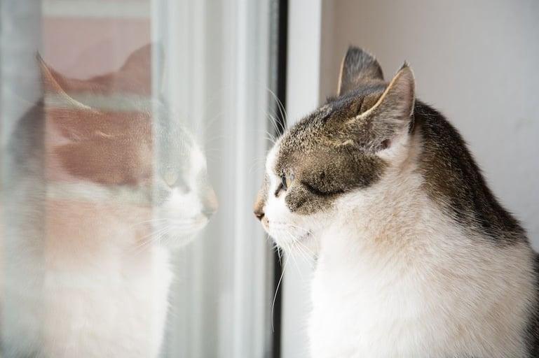 5 redenen waarom jouw kat plast of sproeit in huis