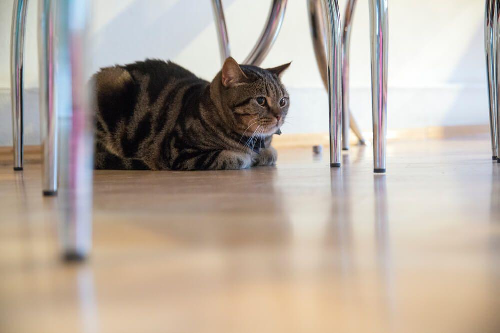 les chats peuvent être effrayés par de nombreuses choses