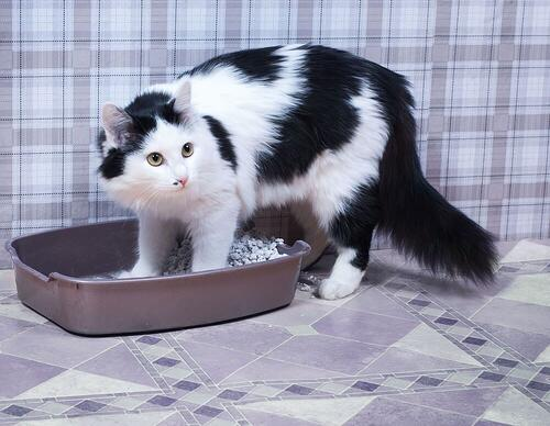 cat steps into the litter box