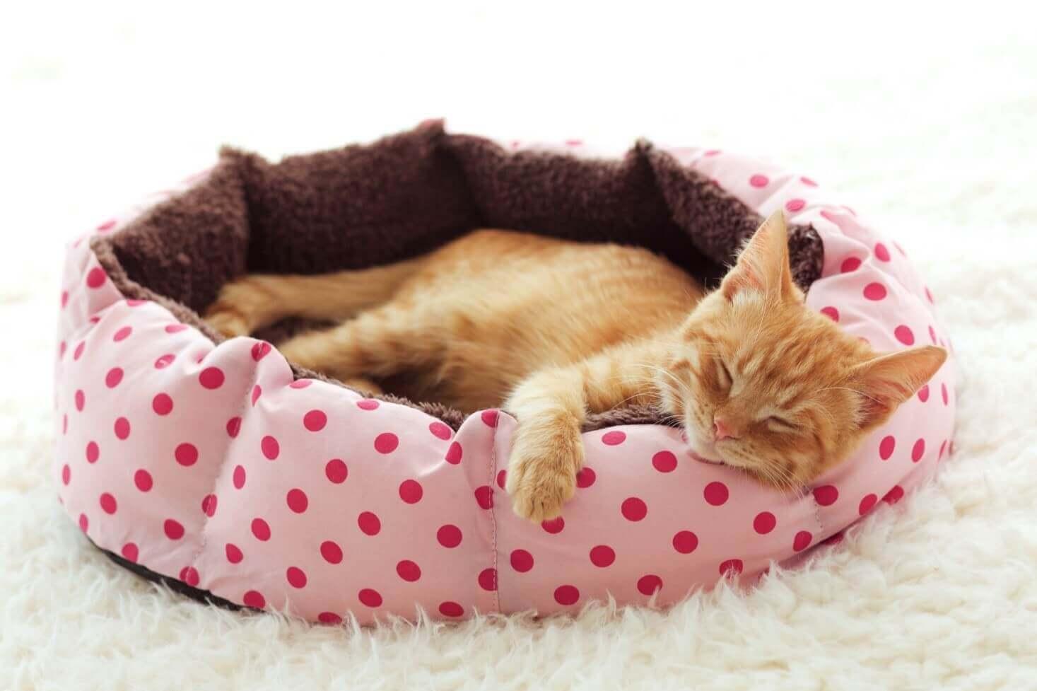 Katze schläft in Katzenkorb