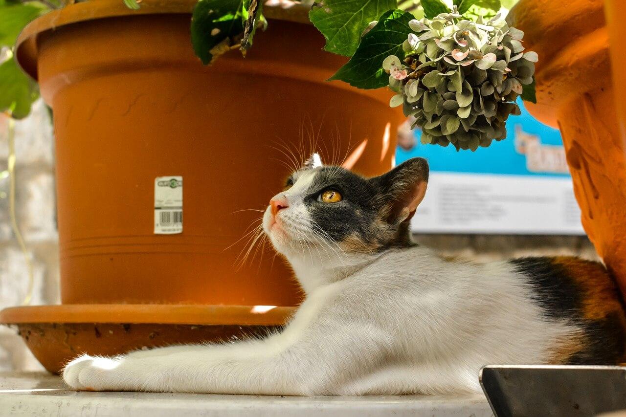 Katze auf Balkon mit Pflanzen