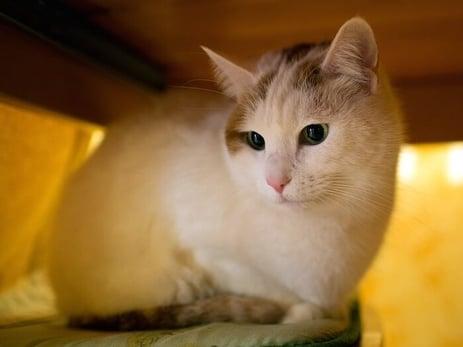 cat-hiding-700x525