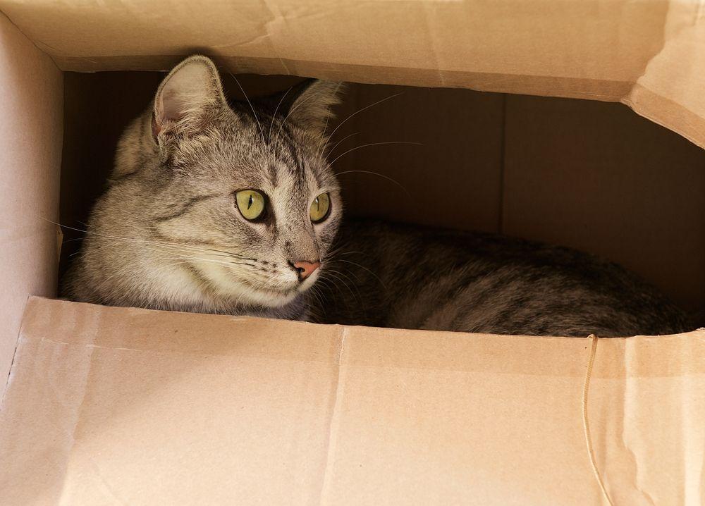 consejos para gatos caseros 1