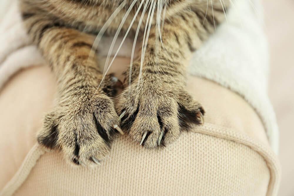 pourquoi couper les ongles de son chat ?