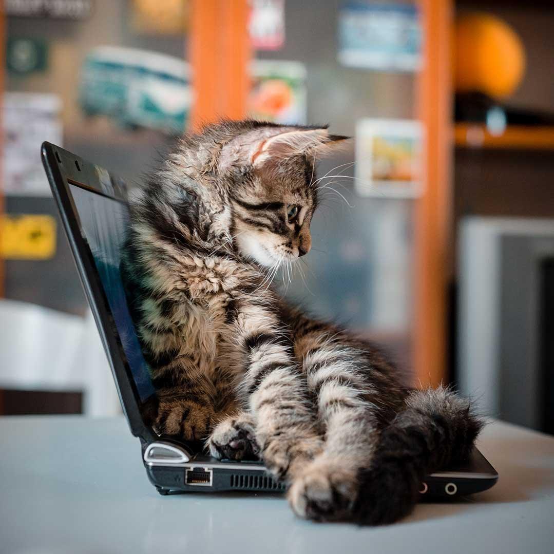 Katze liegt auf Laptop