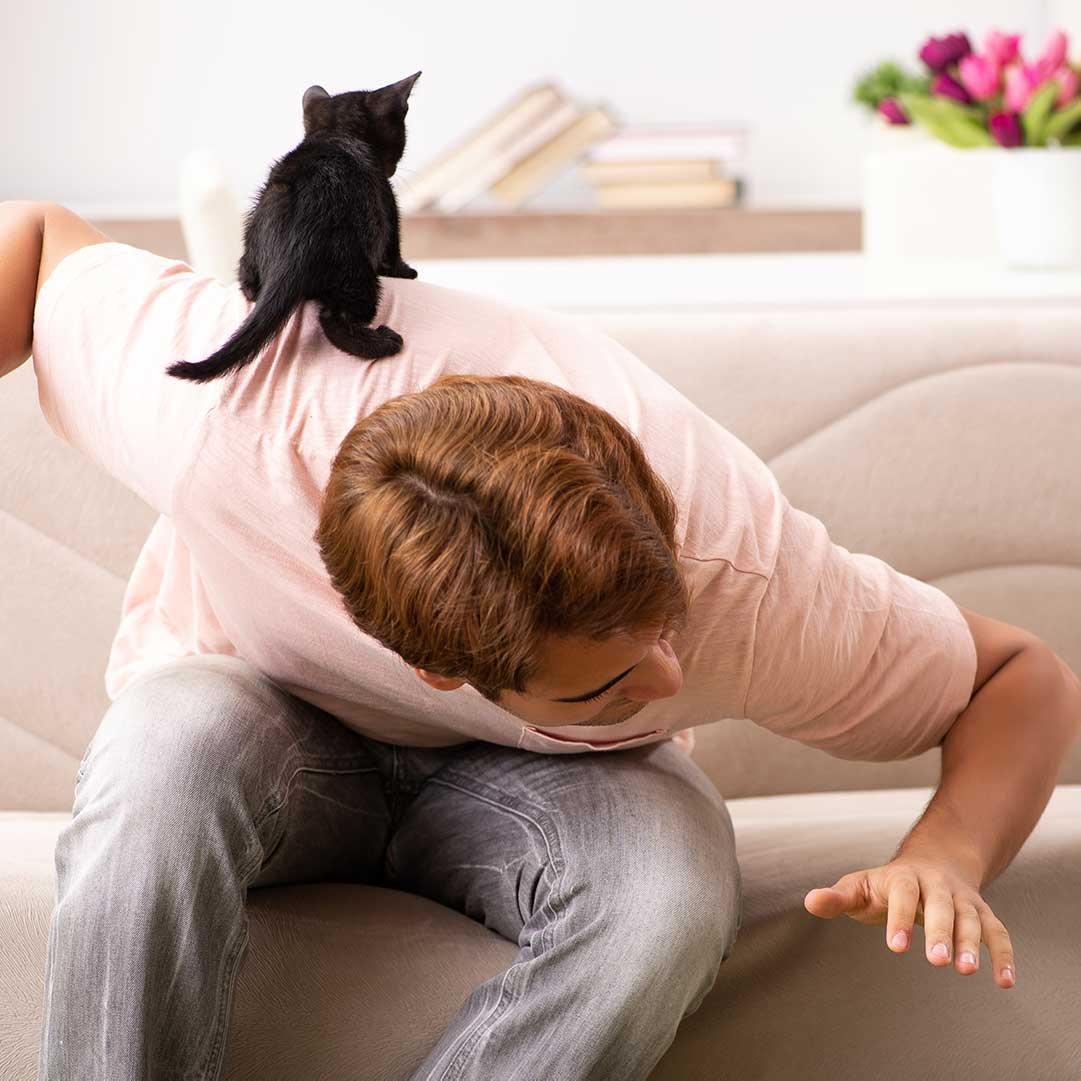 Spielstunde mit Kitten