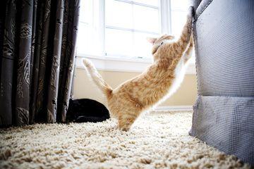 gato rasca sofá feliway