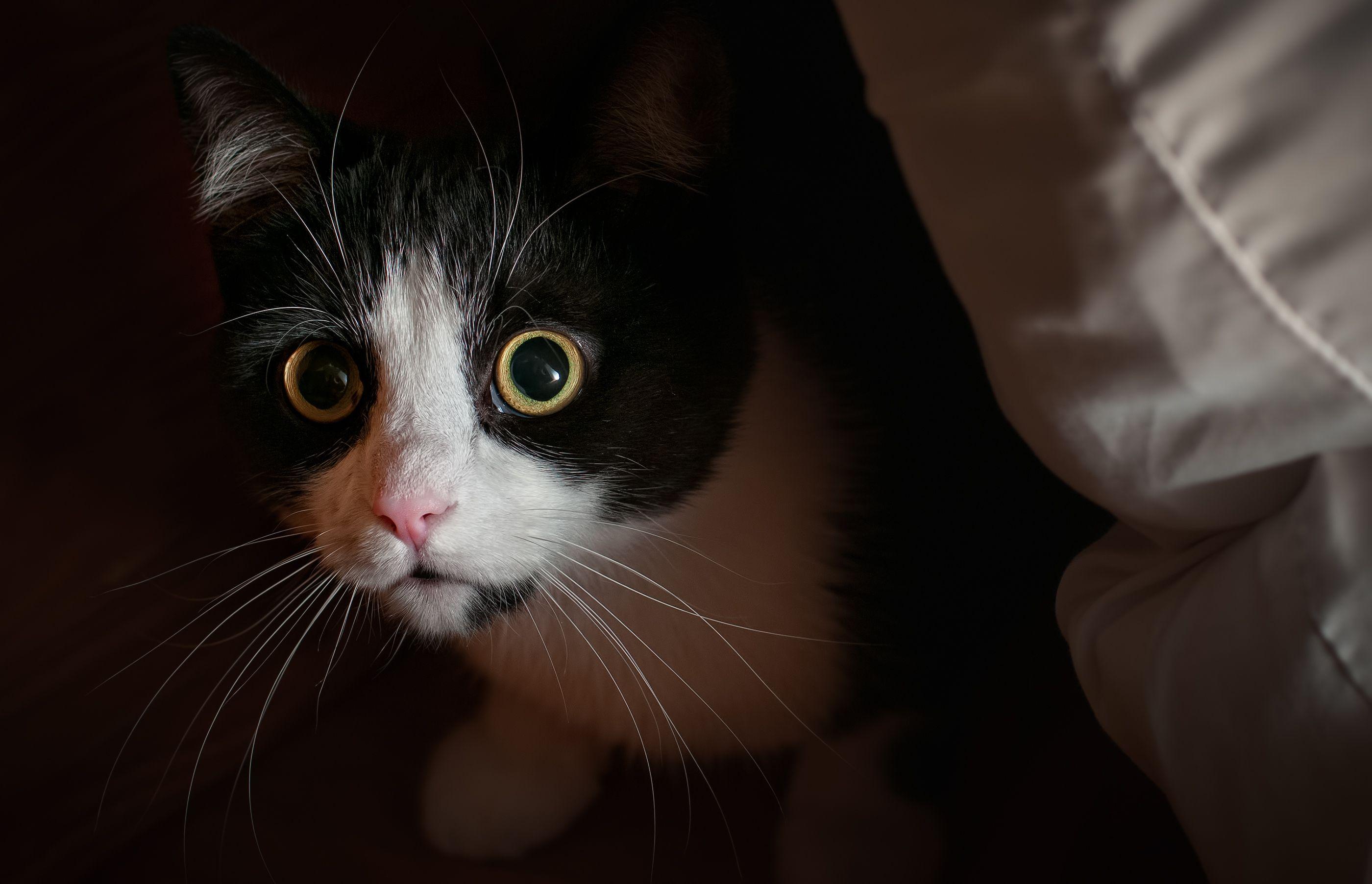 gato-miedo-a-petardos 2