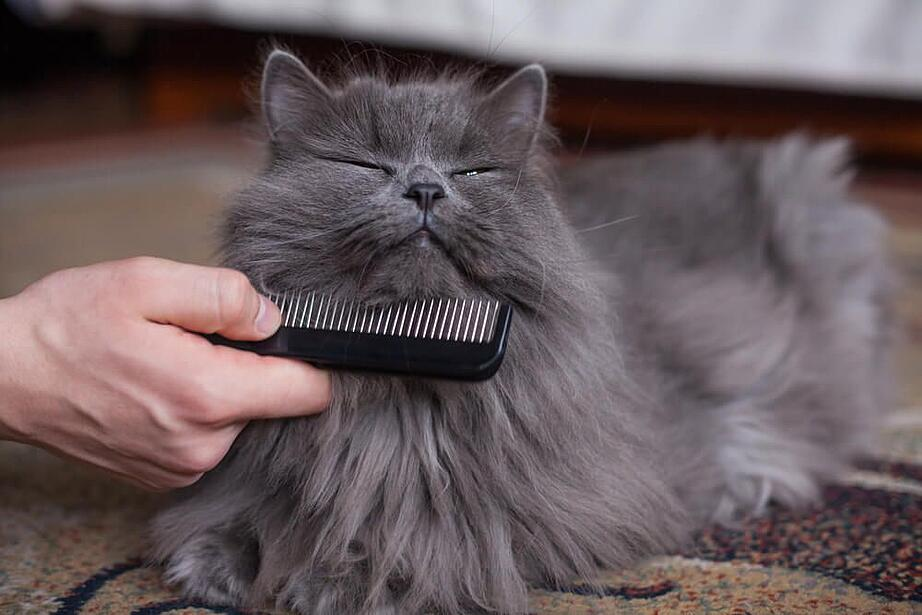 grooming Cat is being combed