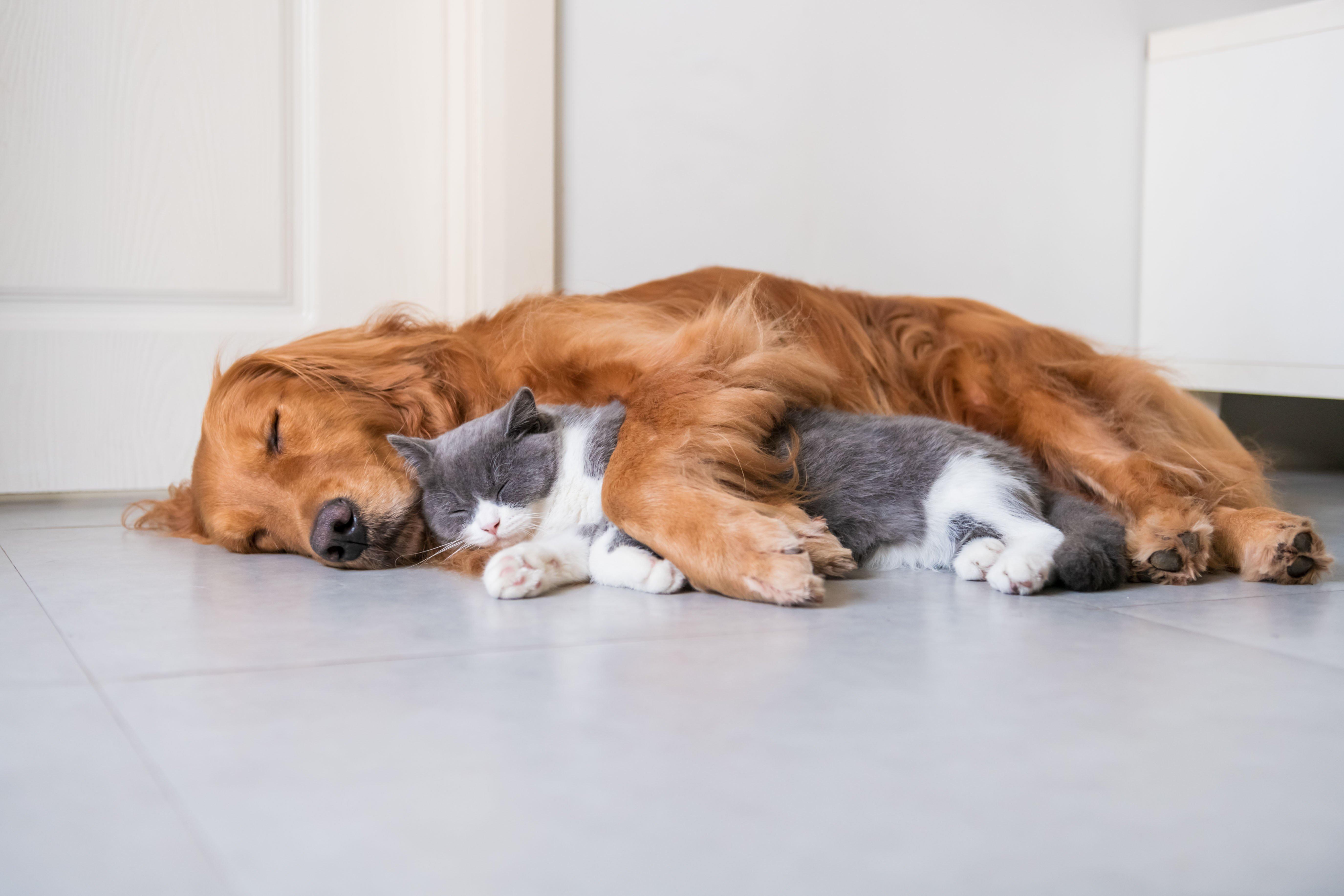 Hund und Katze kuscheln zusammen