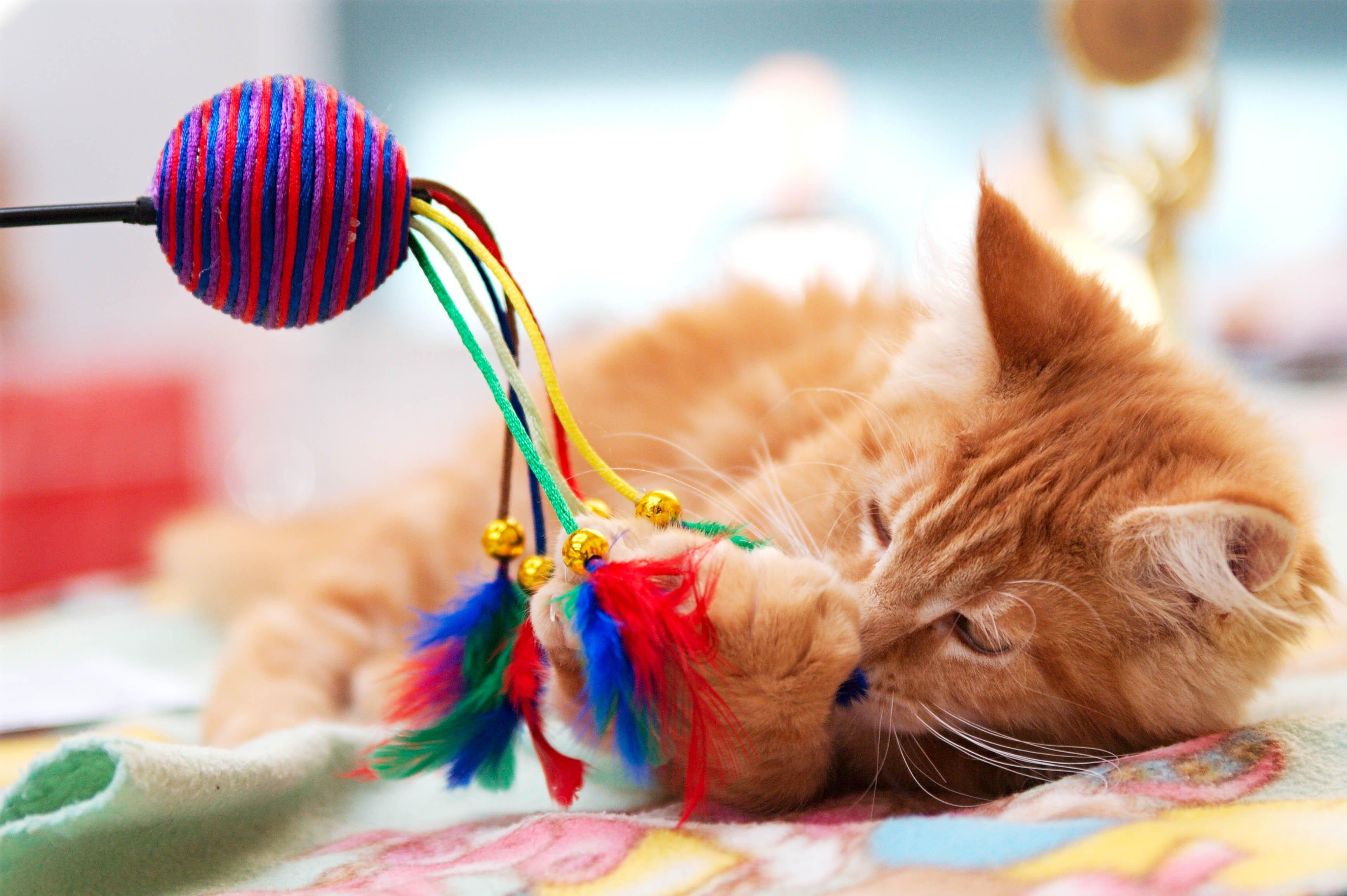 Katze gezielt beschäftigen, um von Konflikten abzulenken