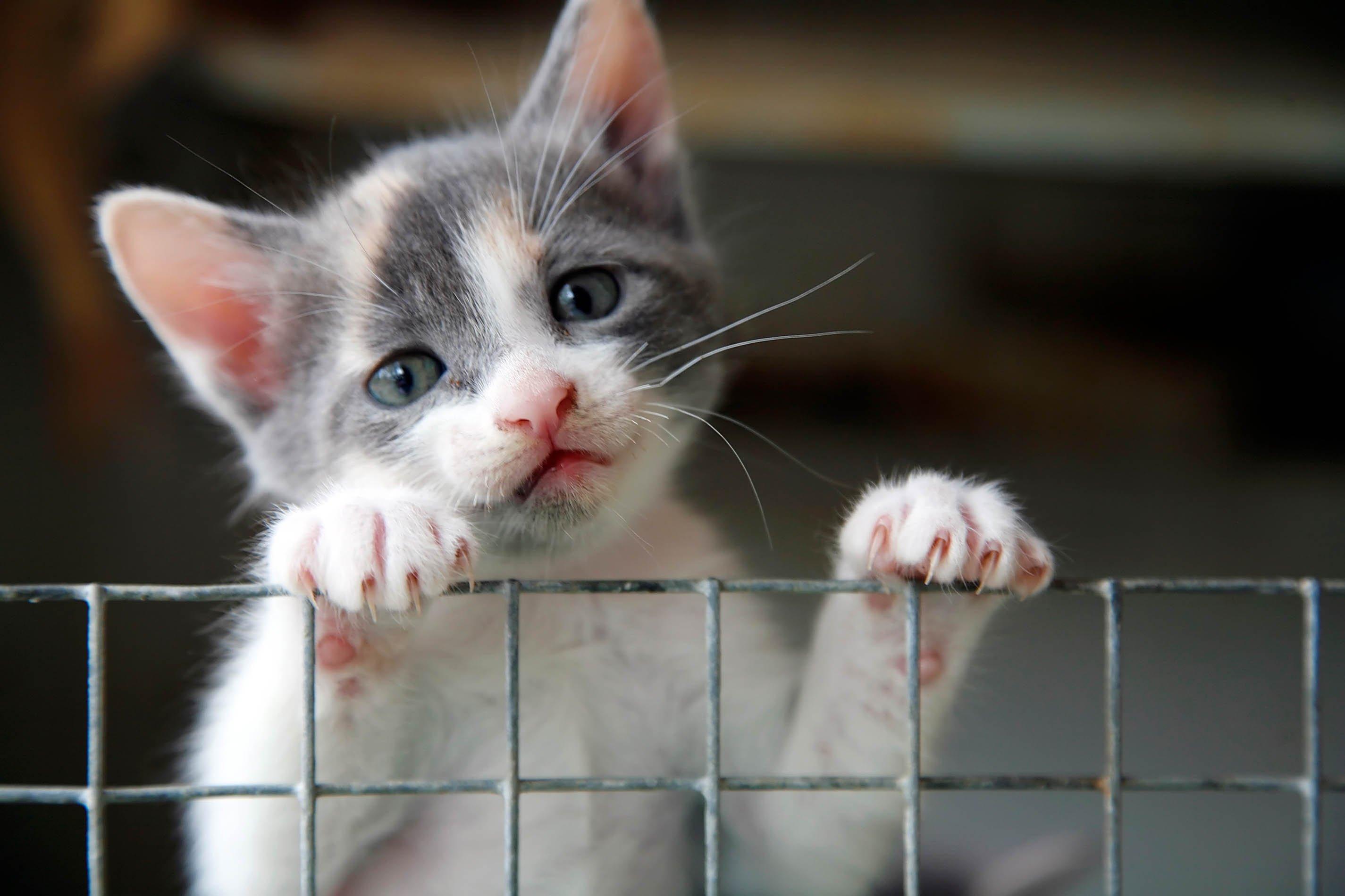 Kitten aus Tierheim